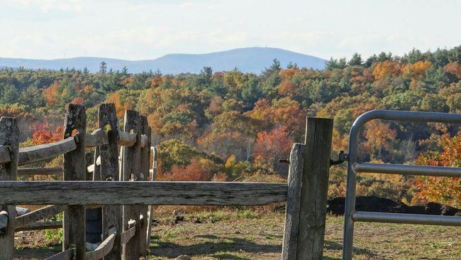 Fall Colors Landscape Farmlandscape Trees Fences Fencelines Hilly Landscape Massachusetts