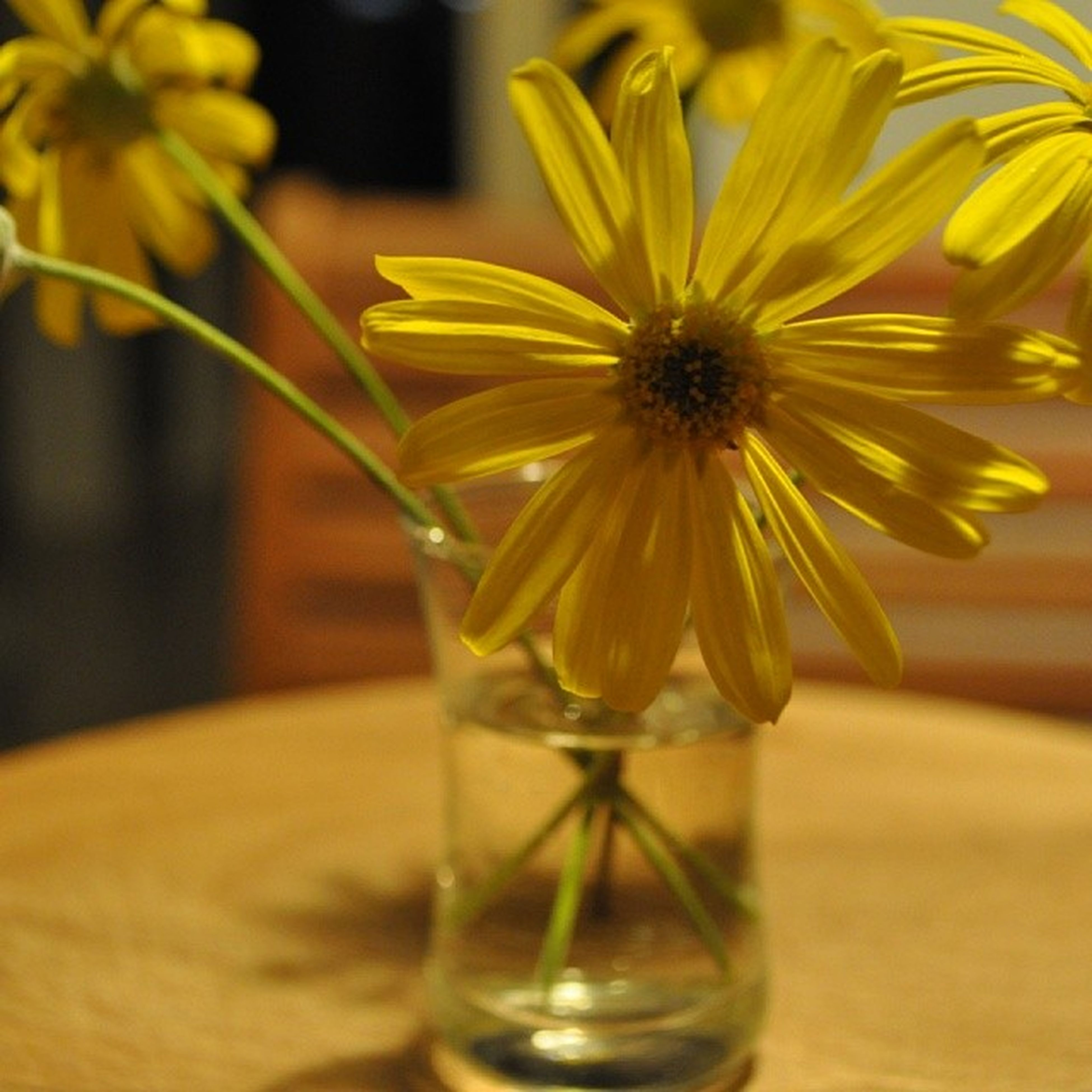 flower, freshness, petal, fragility, yellow, flower head, indoors, close-up, vase, table, focus on foreground, beauty in nature, glass - material, nature, growth, single flower, flower arrangement, transparent, pollen, water