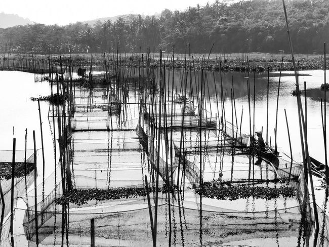 Rawapening #indonesia #centraljava Fishingnets