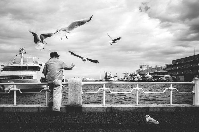 喂海鸥的老爷爷。 Ad 背影 G 横滨 First Eyeem Photo