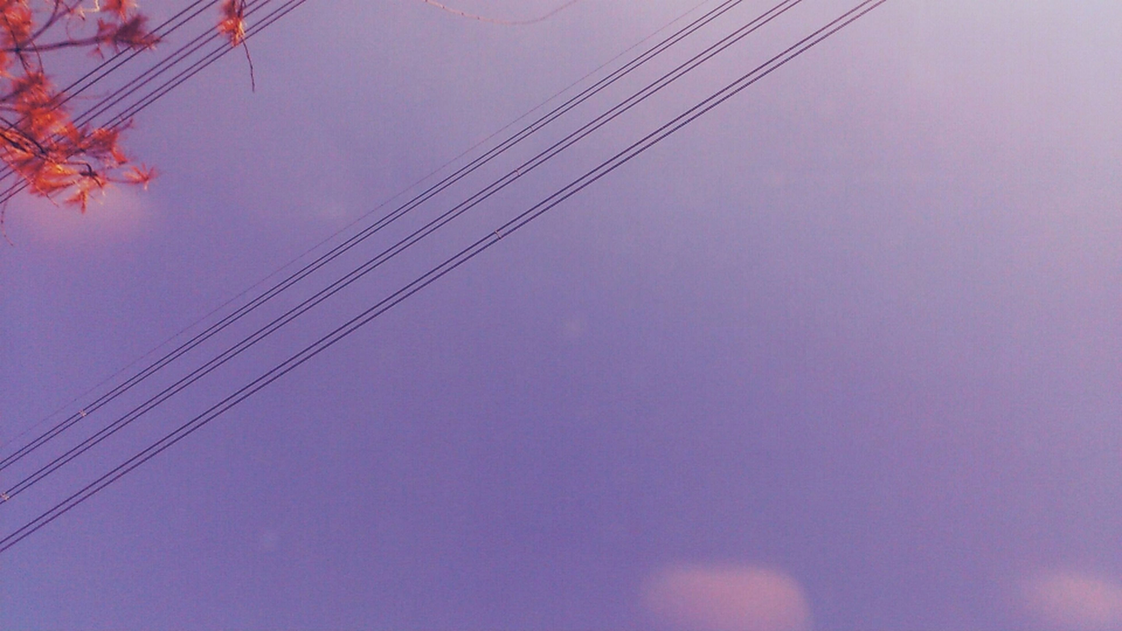 low angle view, power line, tree, sky, nature, branch, beauty in nature, cable, tranquility, growth, no people, outdoors, day, electricity, clear sky, power supply, scenics, tranquil scene, connection, electricity pylon