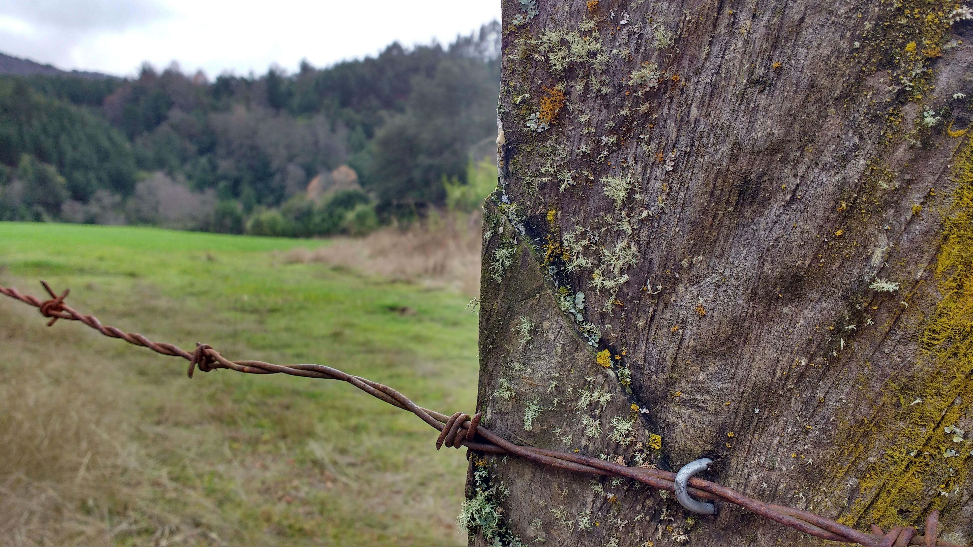 protection, safety, barbed wire, close-up, tree, landscape, fence, focus on foreground, tranquil scene, mountain, non-urban scene, day, tranquility, outdoors, remote, countryside, solitude, sky, extreme close up, no people