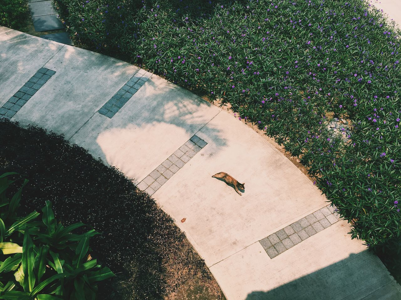 Meow Cat Summer Vscocam Vscogood VSCO Garden Hyatt Regency Hyatt Da Nang Vietnam Flower Showcase March Vacation Hello World Chilling Beautiful Surroundings Hotel