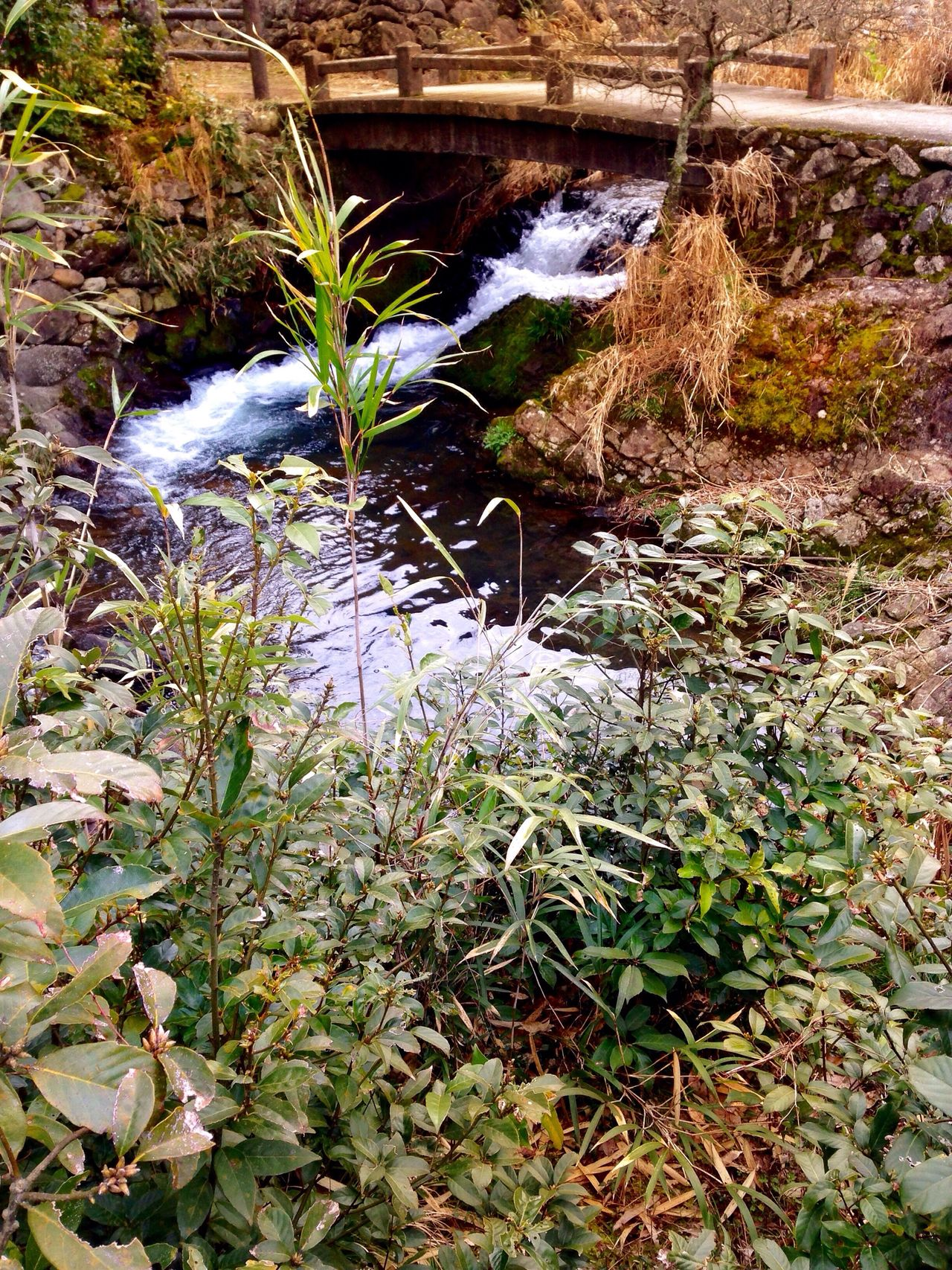 Mywaterfallcollection Wasserfall Creek Stream Creekside Trail Growth Plant Nature Outdoors No People Day Close-up Possibilities  Gateway KYUSHU Japan Photography