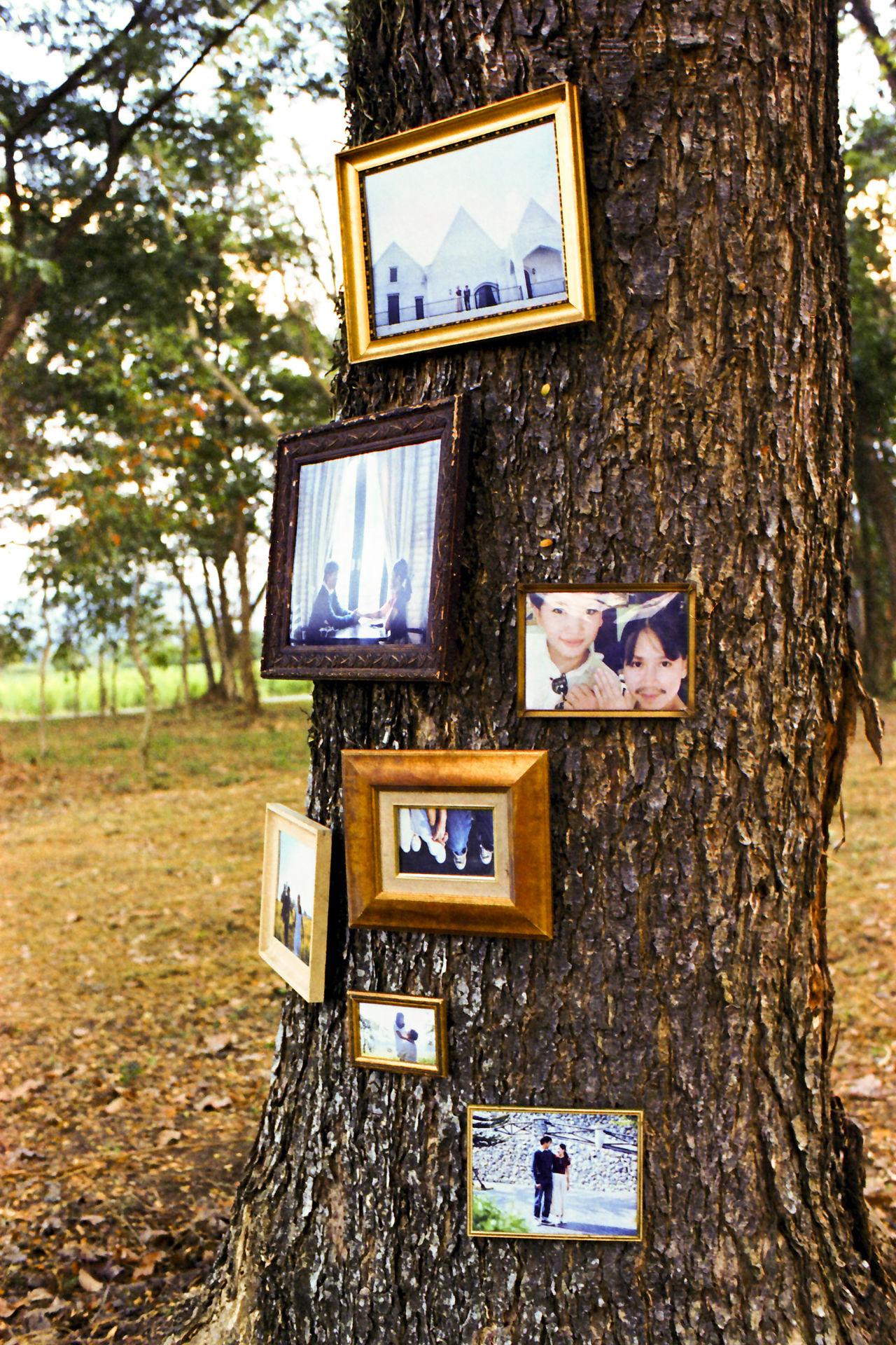 Kodakvision3 Married Landscape Film Filmlooks