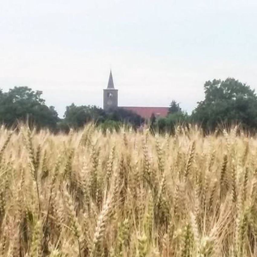 Church In Background Walking Around The City  Walking In Beek Walking With My Best Friend Field Beauty In Nature Canoneos1300D The Week On Eyem Countryside Beek Fresh On Eyeem