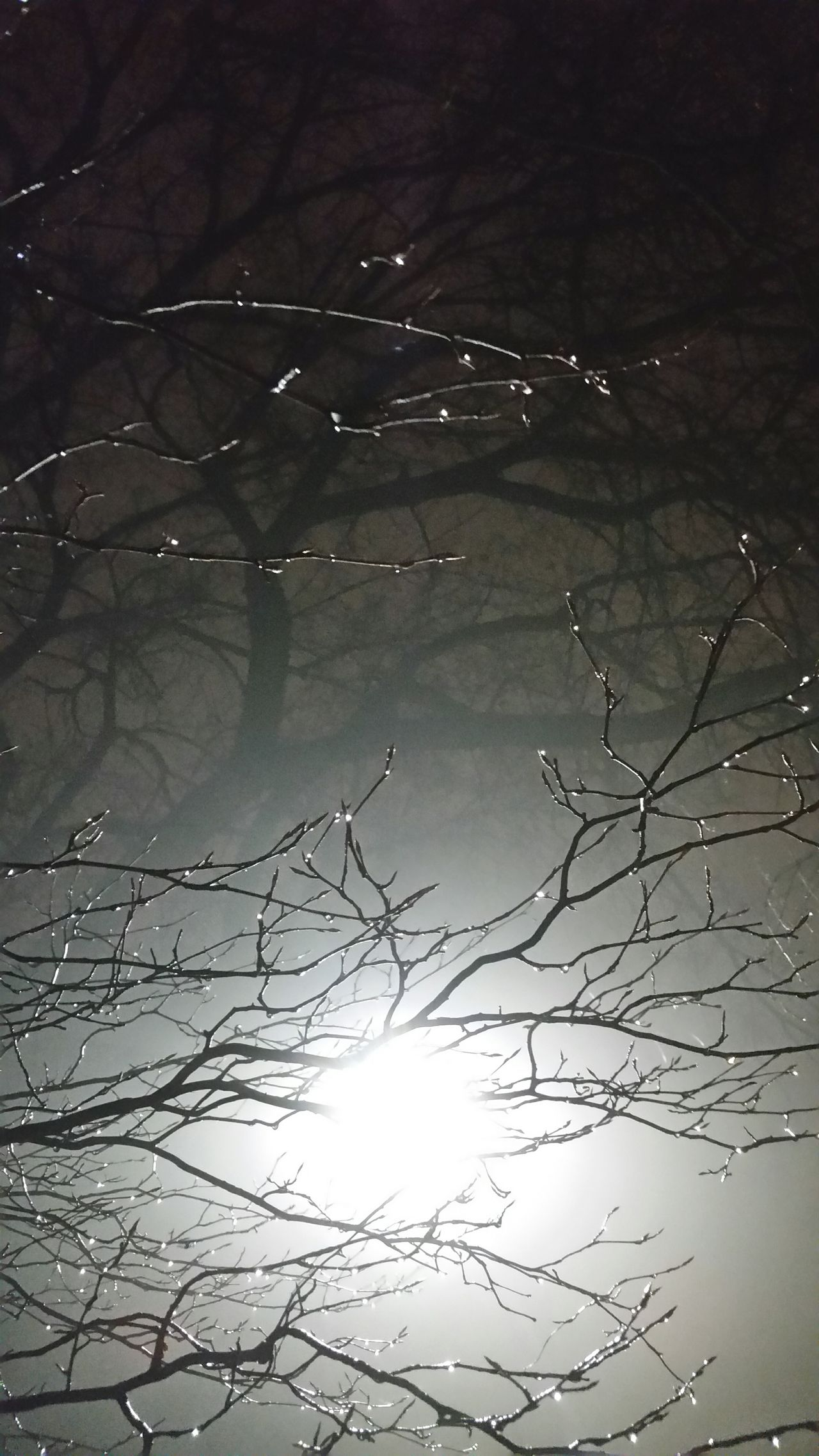 Beauty In Nature Branch Low Angle View Outdoors Neurons Dendrites  Brain Axon Nightphotography Trees Shodow Rain Drops 4K