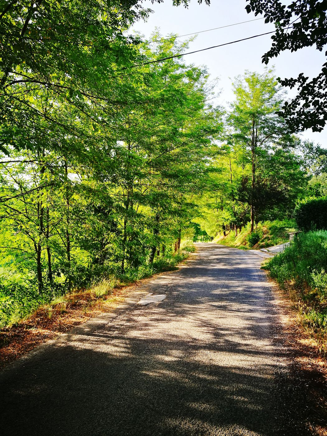 Tree The Way Forward Nature Growth Day No People Outdoors Shadow Sunlight Tranquility Beauty In Nature Green Color Scenics Grass Sky Walking Around Walking Walking Around Taking PicturesNature Beautiful Place Italianlandscape Countryside Life Wonderful Place Italycountryside Travel