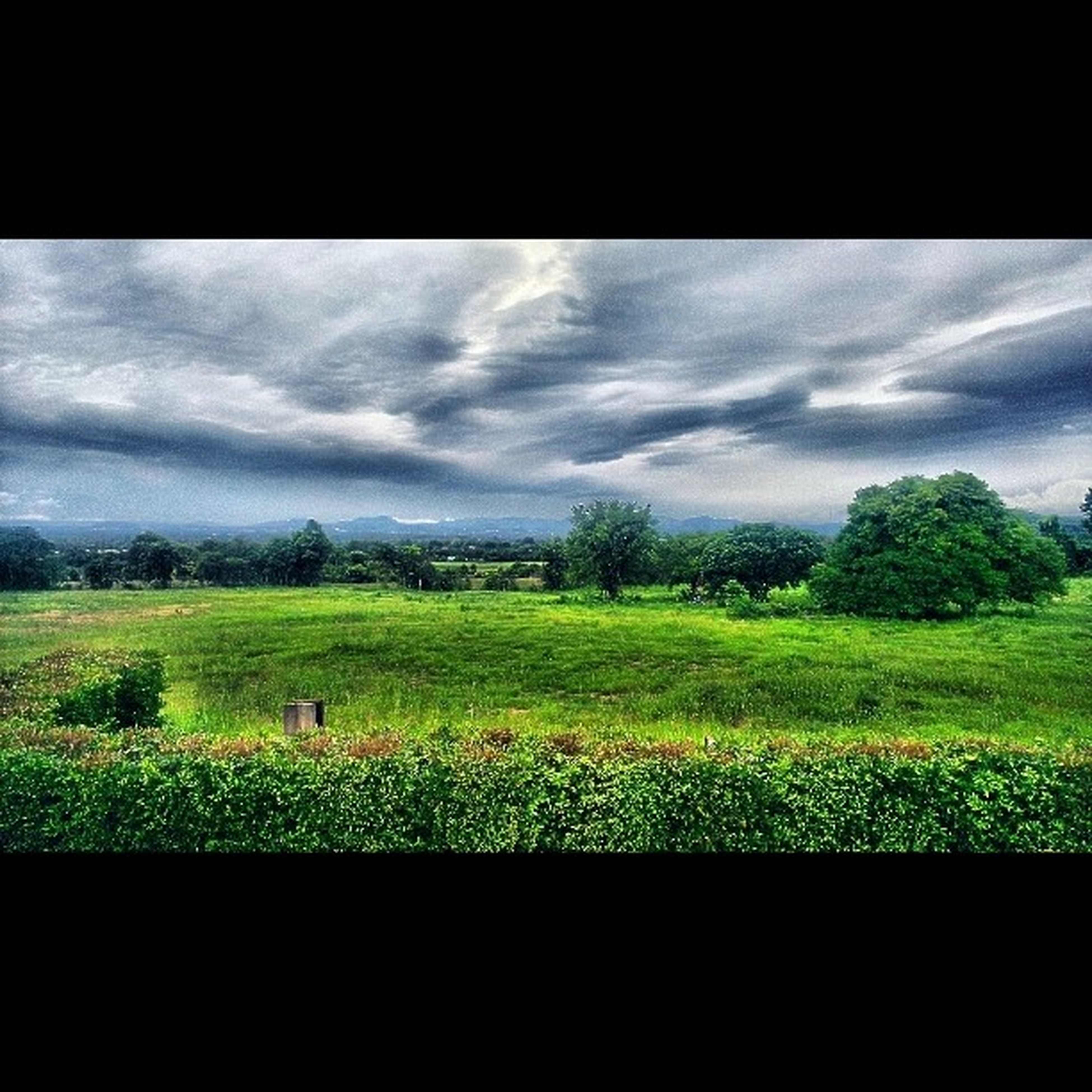 sky, field, landscape, transfer print, tranquil scene, growth, beauty in nature, tranquility, tree, nature, rural scene, cloud - sky, scenics, green color, auto post production filter, cloud, agriculture, plant, grass, cloudy