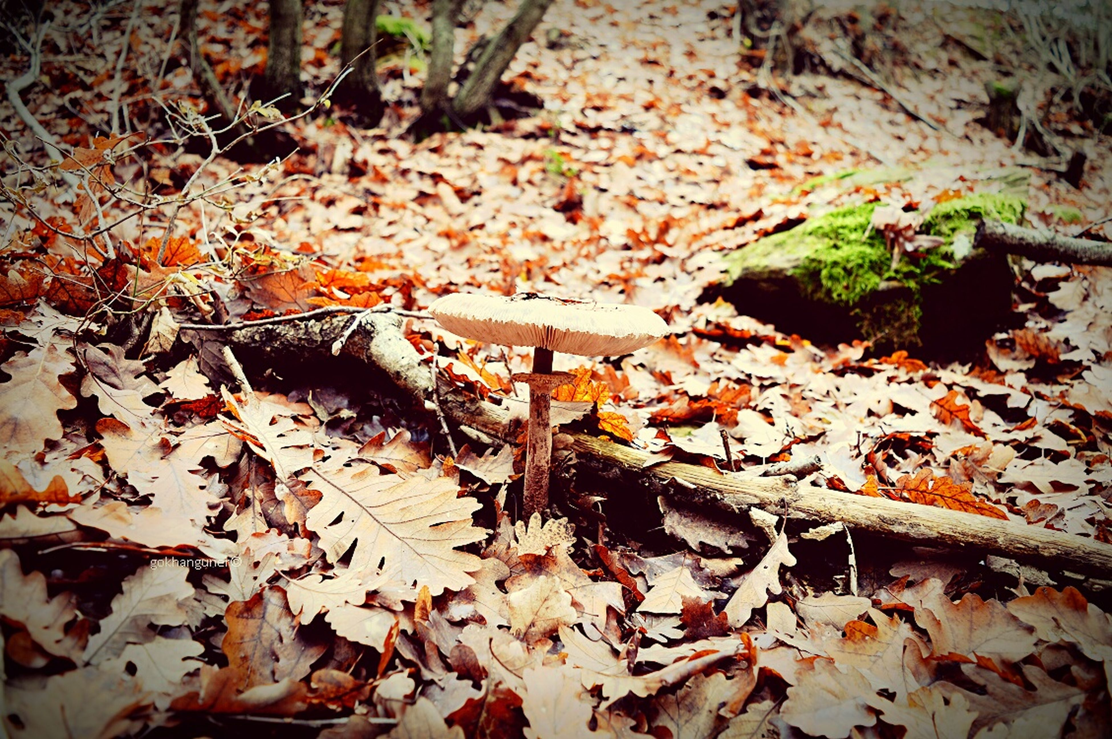 leaf, autumn, change, dry, leaves, fallen, high angle view, nature, season, forest, tranquility, ground, falling, plant, growth, day, field, outdoors, close-up, maple leaf