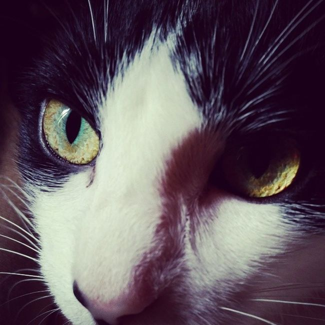 Themingming Catsofinstagram Cats Fiercefelines blackandwhitecats