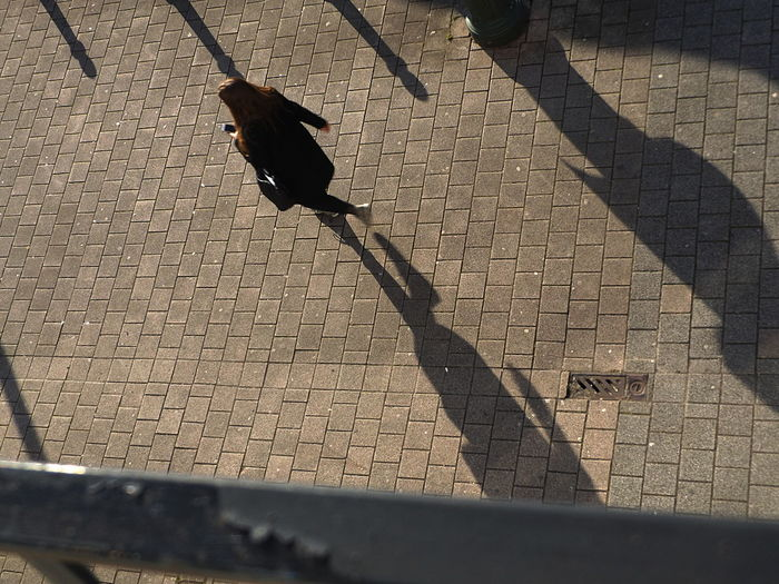 Shadow. Bird Day Focus On Shadow Birdview High Angle View No People Outdoors Perching Shadow Street Streetphotography Sunlight Birdv