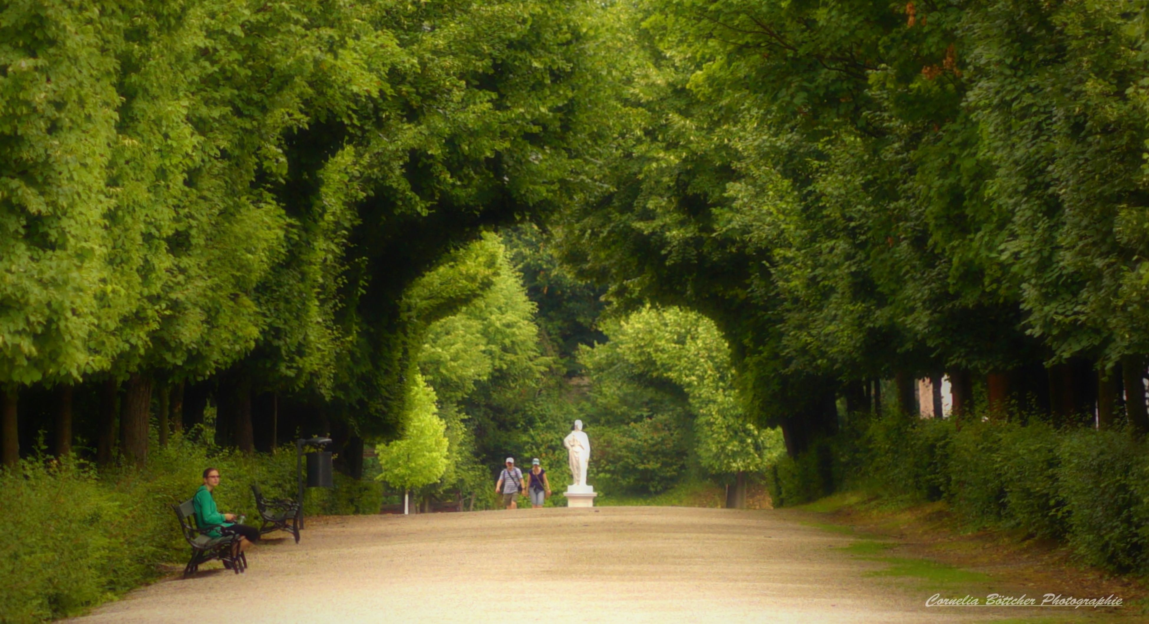 tree, bicycle, cycling, real people, nature, growth, men, transportation, the way forward, road, full length, outdoors, day, people, adult