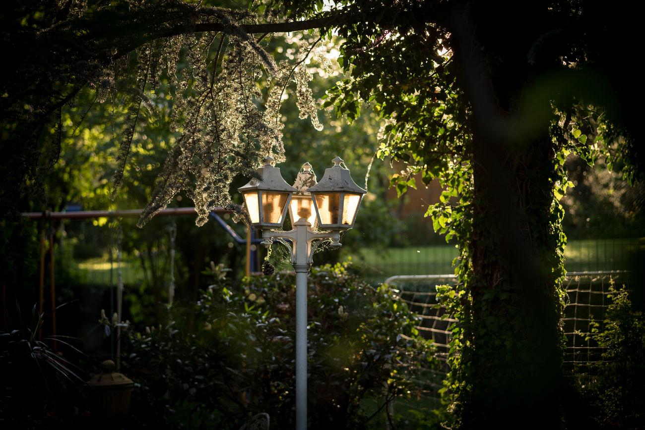 Evening in the garden Evening Evening Light Garden Garden Photography Lantern No People Outdoors Plants And Flowers Selectiv Focus Sunlit
