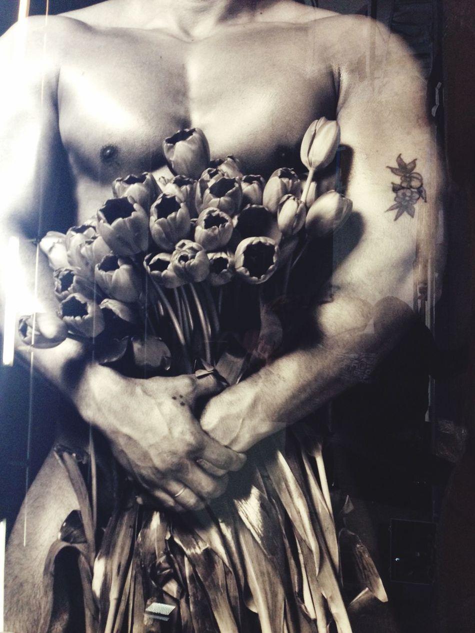 Tulips Netherlands Amsterdam Studio Erwin Olaf Holland