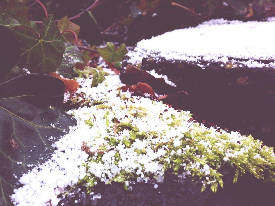 Winter Winter Wonderland Snow Eye4photography  Lovethewayyousmile EyeEm Nature Lover EyeEm Gallery Nature_collection Enjoying Nature