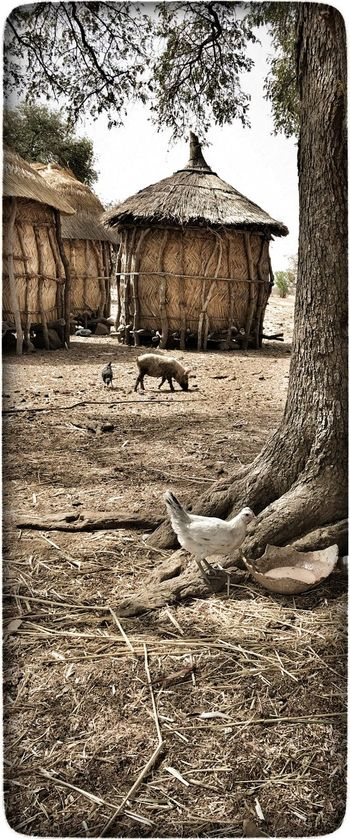 Dorf in Burkina Faso Animal Themes Architecture Built Structure Day Domestic Animals Landscape Mammal Nature No People Outdoors Tree Village