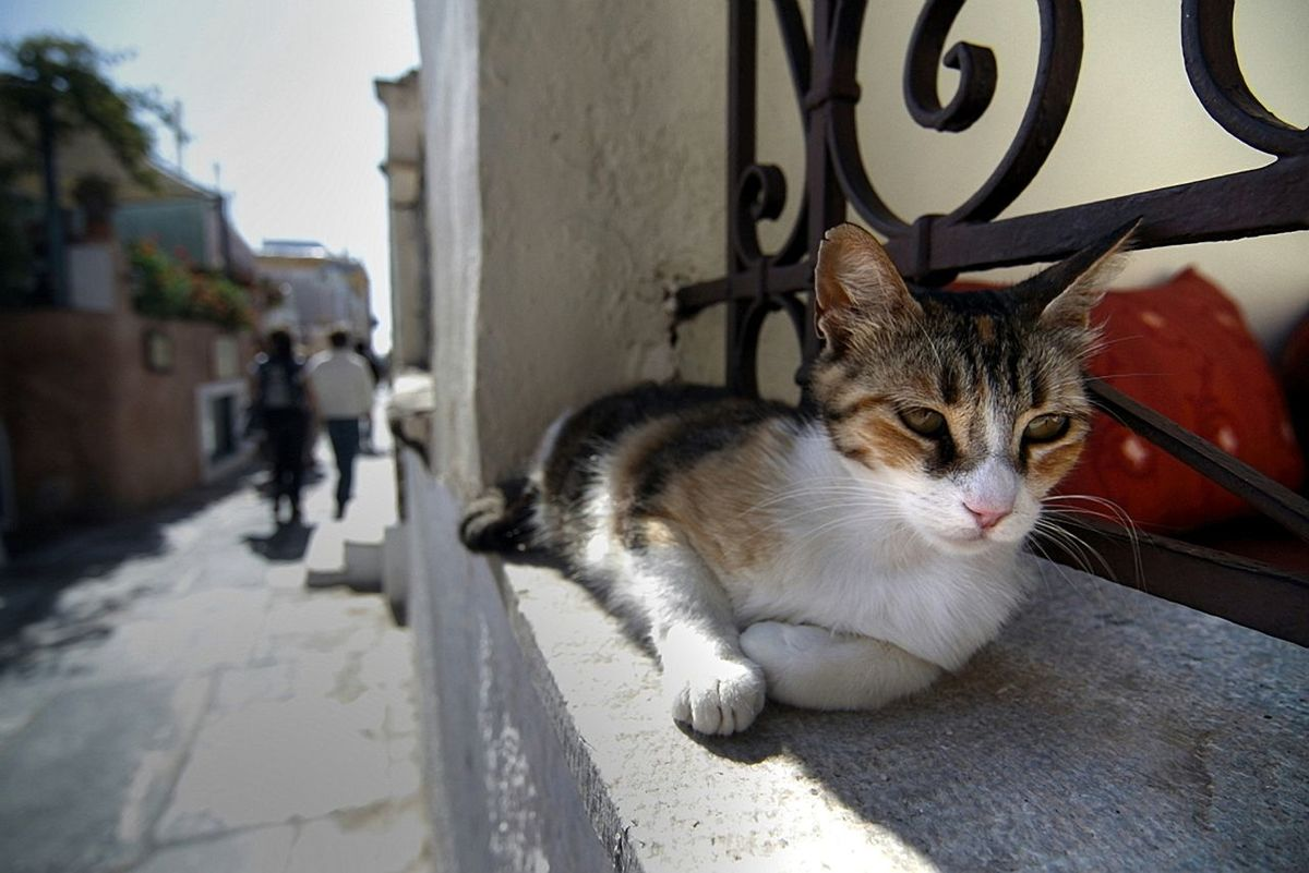 Afternoon Nap ~ Animal Themes Architecture Cat Content Day Domestic Animals Domestic Cat Feline Italy Ledge Mammal Nap No People One Animal Outdoors Pets Resting Place Stretched Out