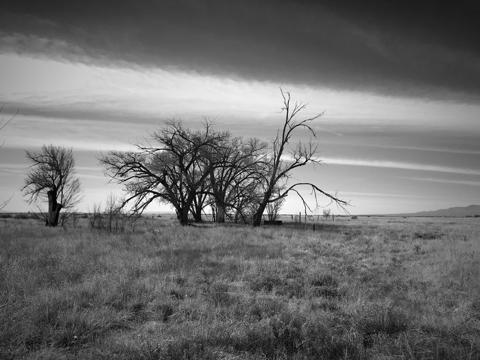 """""""Wasteland"""" Trees stripped bare by Winter's ravage stand alone on the open grasslands of Central New Mexico. Grasslands New Mexico Photography New Mexico Bare Tree Blackandwhite Photography Black And White Blackandwhite Landscape Bare Tree Tree Nature Grass"""