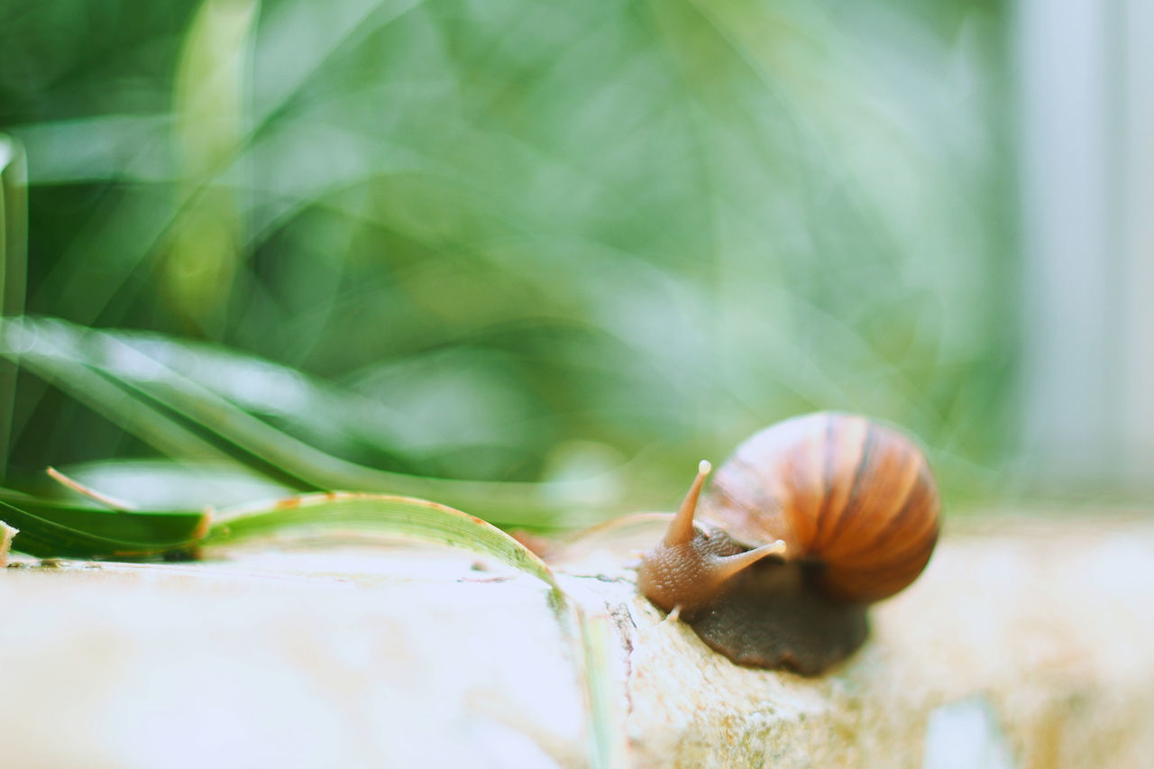 Snail Close-up One Animal Animal Themes Surface Level Nature Gastropod Drizzling Day Showcase March 2017 Springtime No People Macro Macro Photography Idyllic Idyllic Scenery
