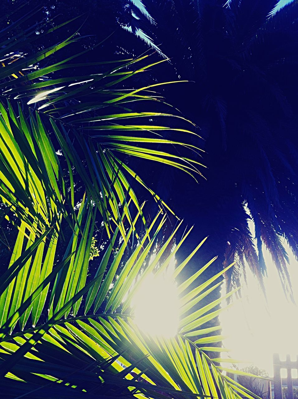 palm tree, palm leaf, low angle view, growth, tree, no people, green color, frond, outdoors, leaf, nature, beauty in nature, day, close-up, sky