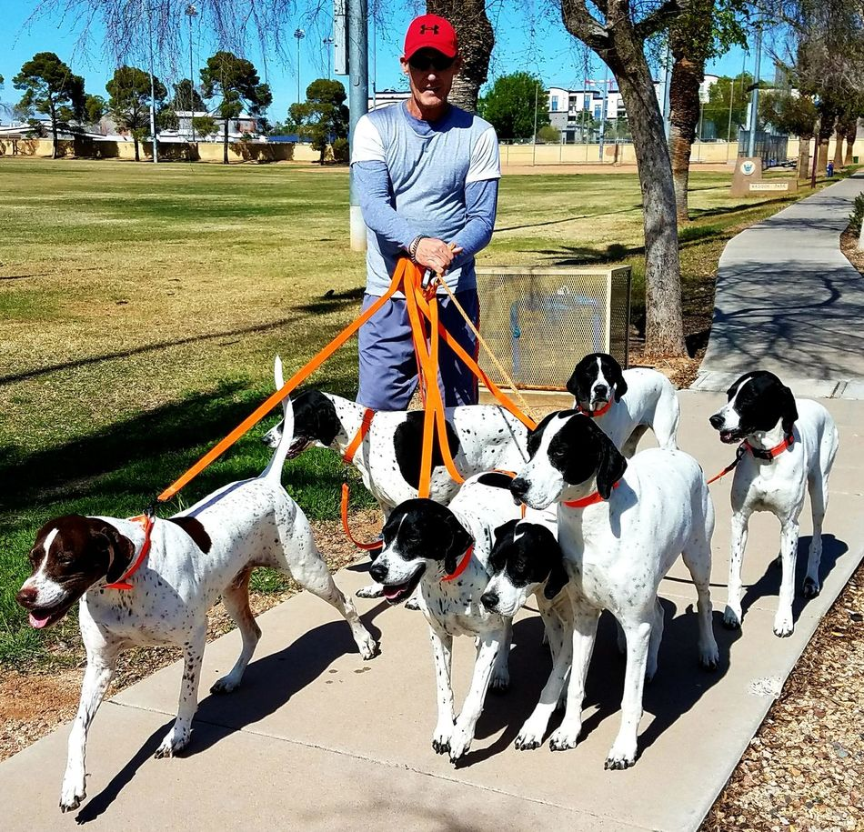For the love of the puppies!!! This gentleman walks his fur babies, on a beautiful winter day in a Phoenix park! Leisure Activity Full Length Real People Outdoors Day Grass Tree One Person Animal Themes City Park Winter In The Desert ❤❤❤