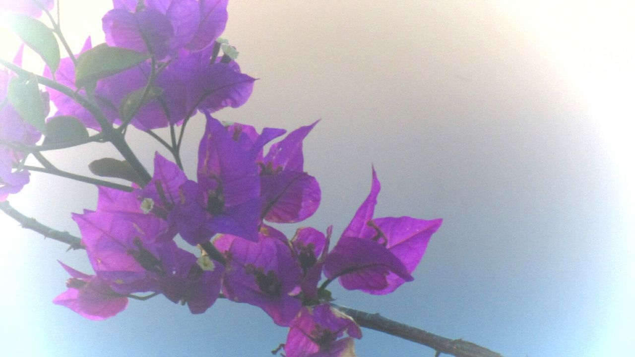 flower, growth, nature, plant, no people, beauty in nature, freshness, fragility, clear sky, outdoors, close-up, sky
