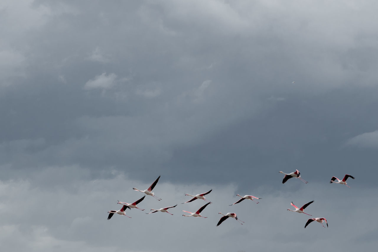 Flamingos 1 Air Force Air Vehicle Airplane Airshow Cloud - Sky Day Fighter Plane Flamingo Flying Low Angle View Military Millennial Pink Nature No People Outdoors Sky Transportation