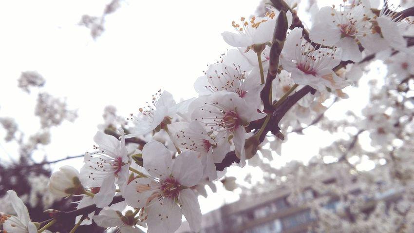 Open Spring Flowers Love ♥ Quiet