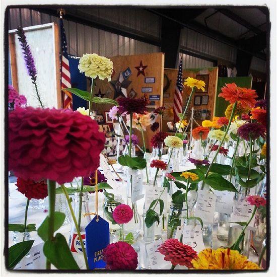 Countyfair Flowers Lovecincy