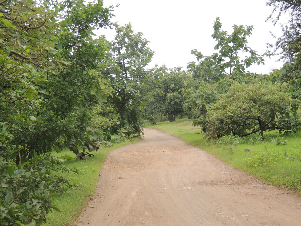 Beauty In Nature Day EyEmNewHere Green Color India Nature No People Outdoors The Way Forward Tree Without Edit ^^