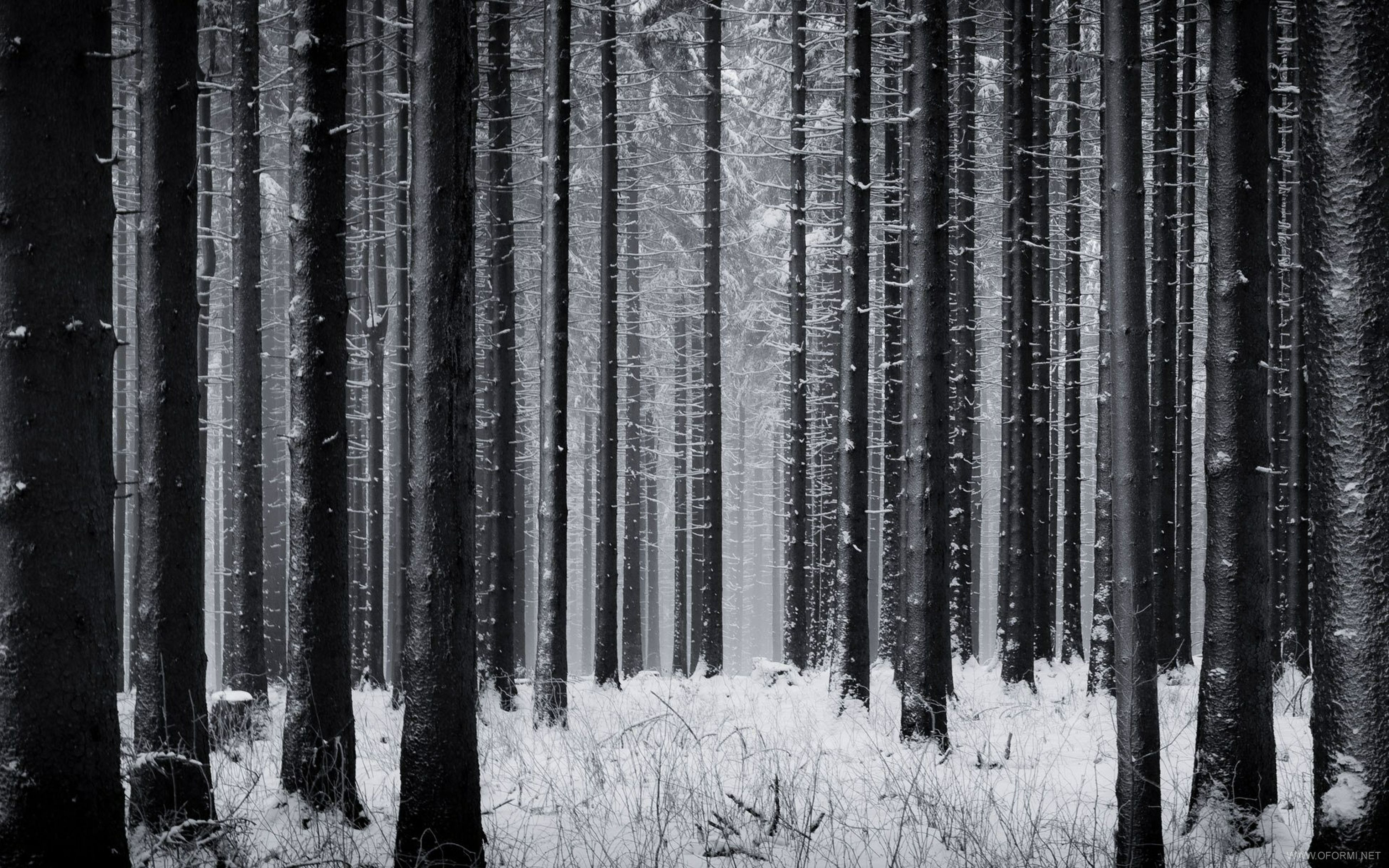 tree, woodland, winter, cold temperature, tree trunk, forest, snow, tranquility, tranquil scene, nature, season, weather, beauty in nature, landscape, abundance, scenics, growth, non-urban scene, covering, outdoors