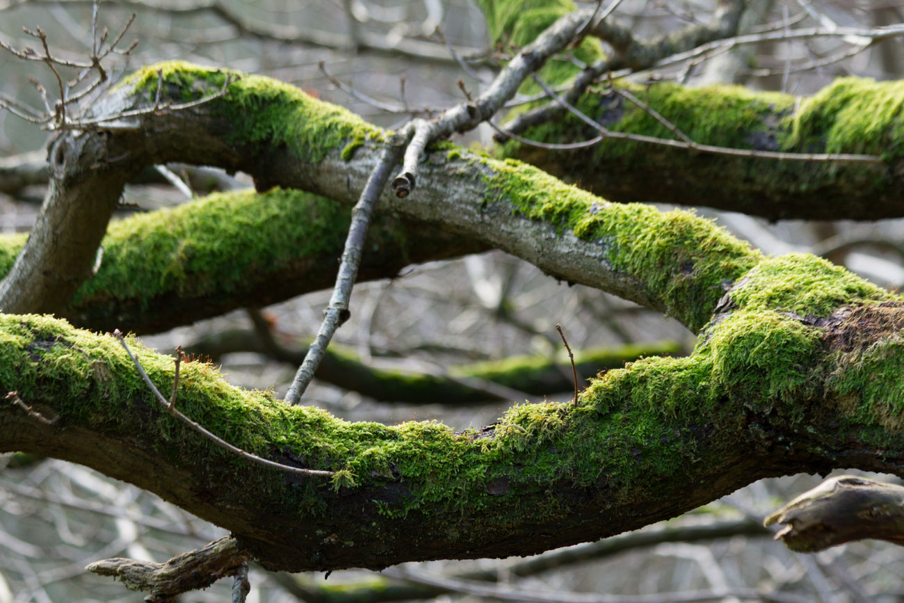 Bark Texture Beauty In Nature Branch Green Green Color Moss Nature Outdoors Tree Tree Tree Trunk