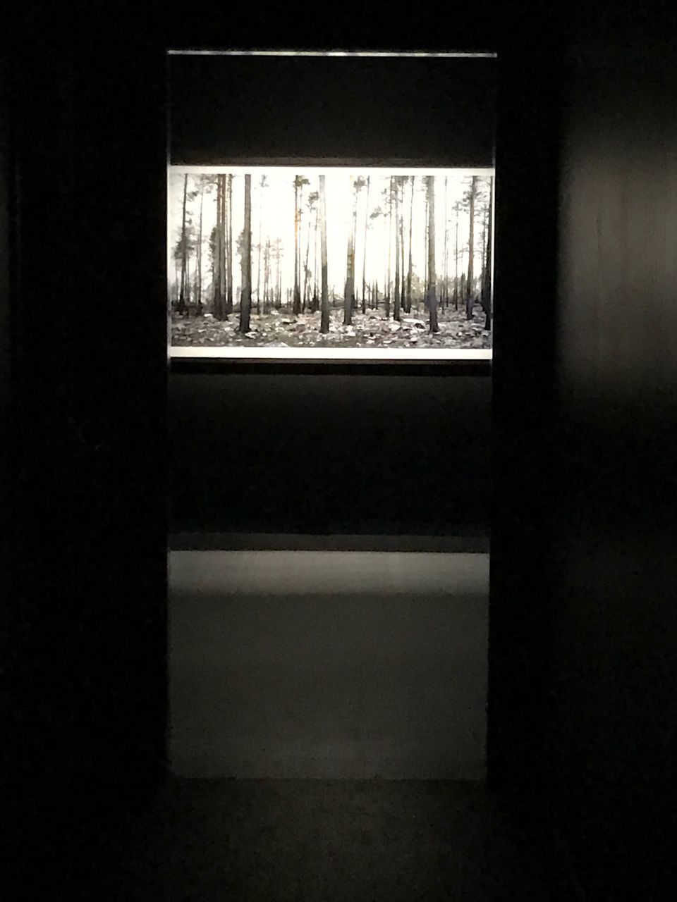 window, indoors, tree, day, silhouette, no people, architecture, nature, close-up