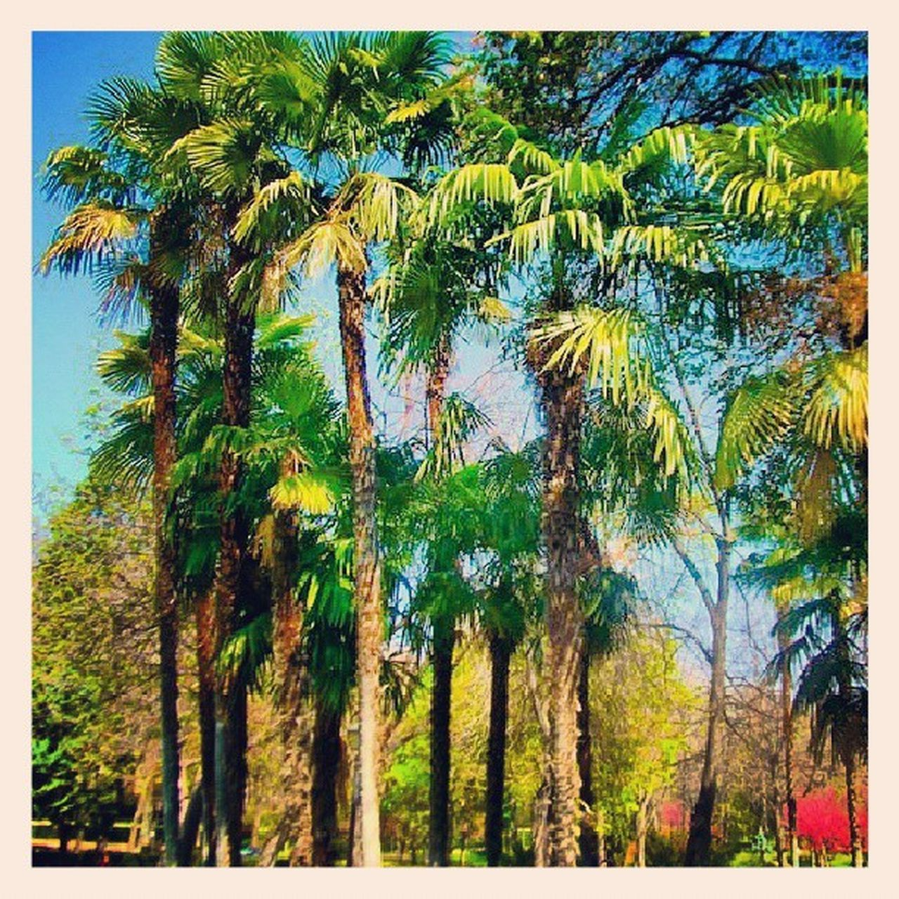 palm tree, tree, nature, growth, beauty in nature, tree trunk, tranquility, scenics, outdoors, day, no people, summer, low angle view, forest, sky