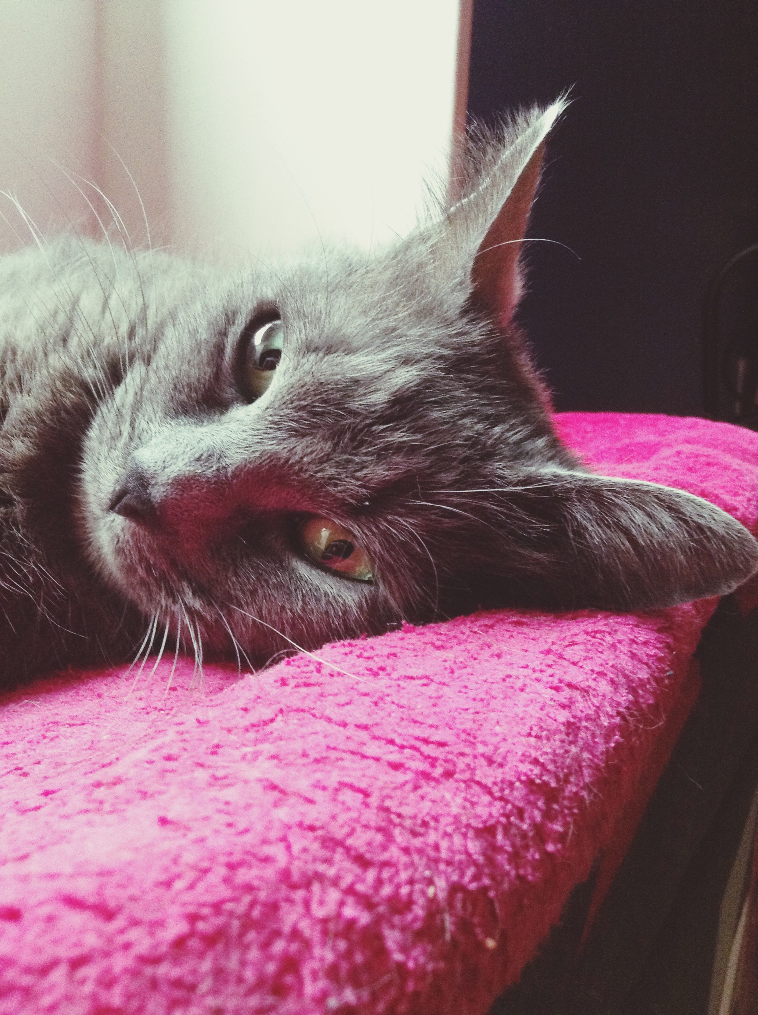 domestic cat, pets, domestic animals, one animal, cat, animal themes, indoors, feline, mammal, whisker, relaxation, close-up, animal head, home interior, bed, resting, looking away, portrait, lying down, animal body part