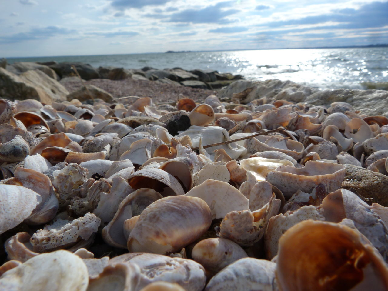 America Greenwich Park Nature Sea Shell Shells Sunny Day Water