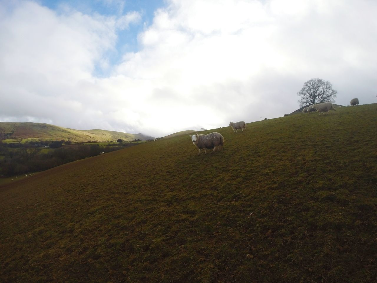 Landscape Nature Scenics Agriculture Beauty In Nature No People Sky Sunday Walk Backgrounds Walking Pen Y Fan Mountain Panoramic Photography Tranquility Pen Y Fan Panoramic View Beauty In Nature Outdoors Mountain Sheep Farm Sheepfarm Wales
