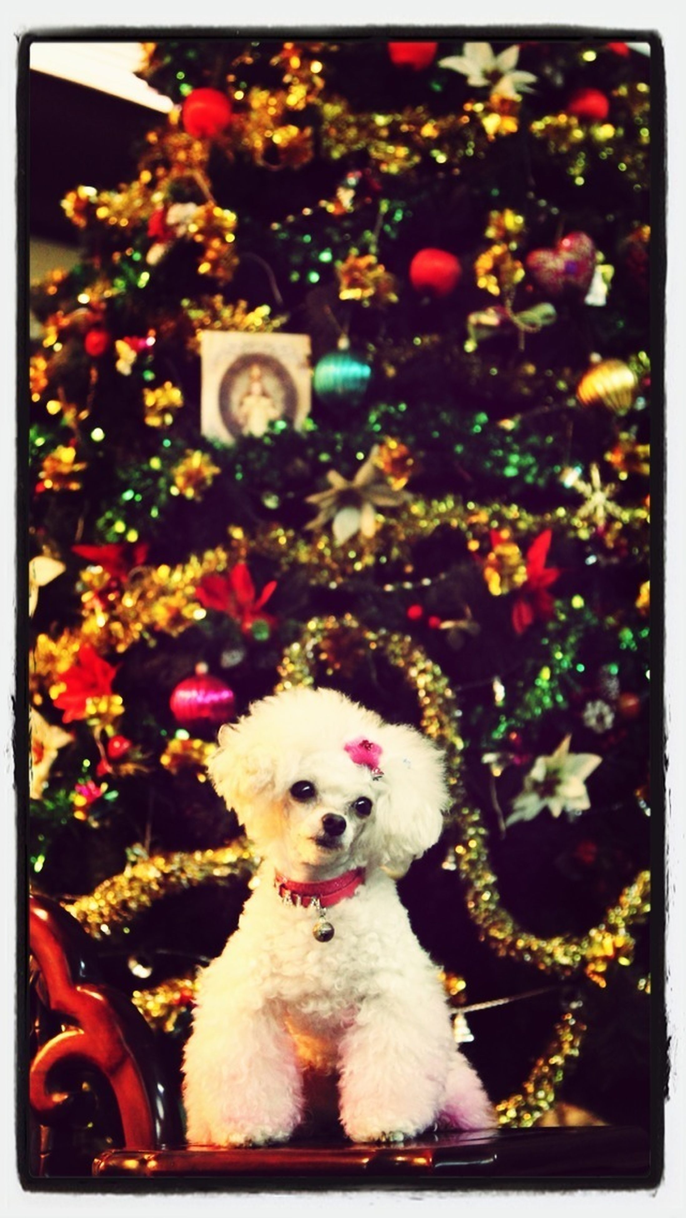 transfer print, pets, auto post production filter, animal themes, domestic animals, dog, one animal, mammal, flower, portrait, looking at camera, indoors, toy, animal representation, no people, focus on foreground, sitting, close-up, day, christmas