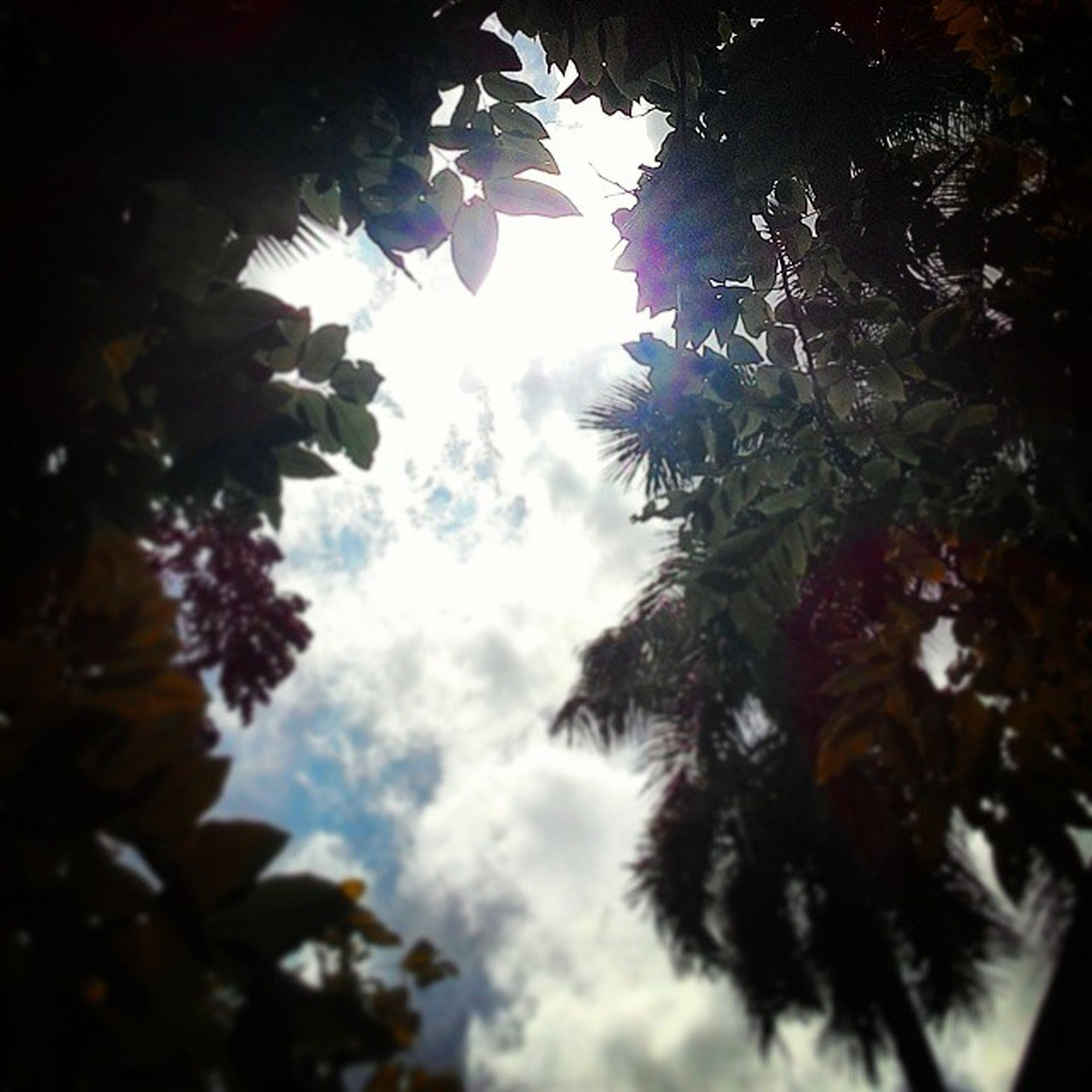 low angle view, tree, sky, leaf, branch, growth, nature, silhouette, day, no people, beauty in nature, outdoors, cloud - sky, animal themes, sunlight, cloud, one animal, tranquility, blue, high section