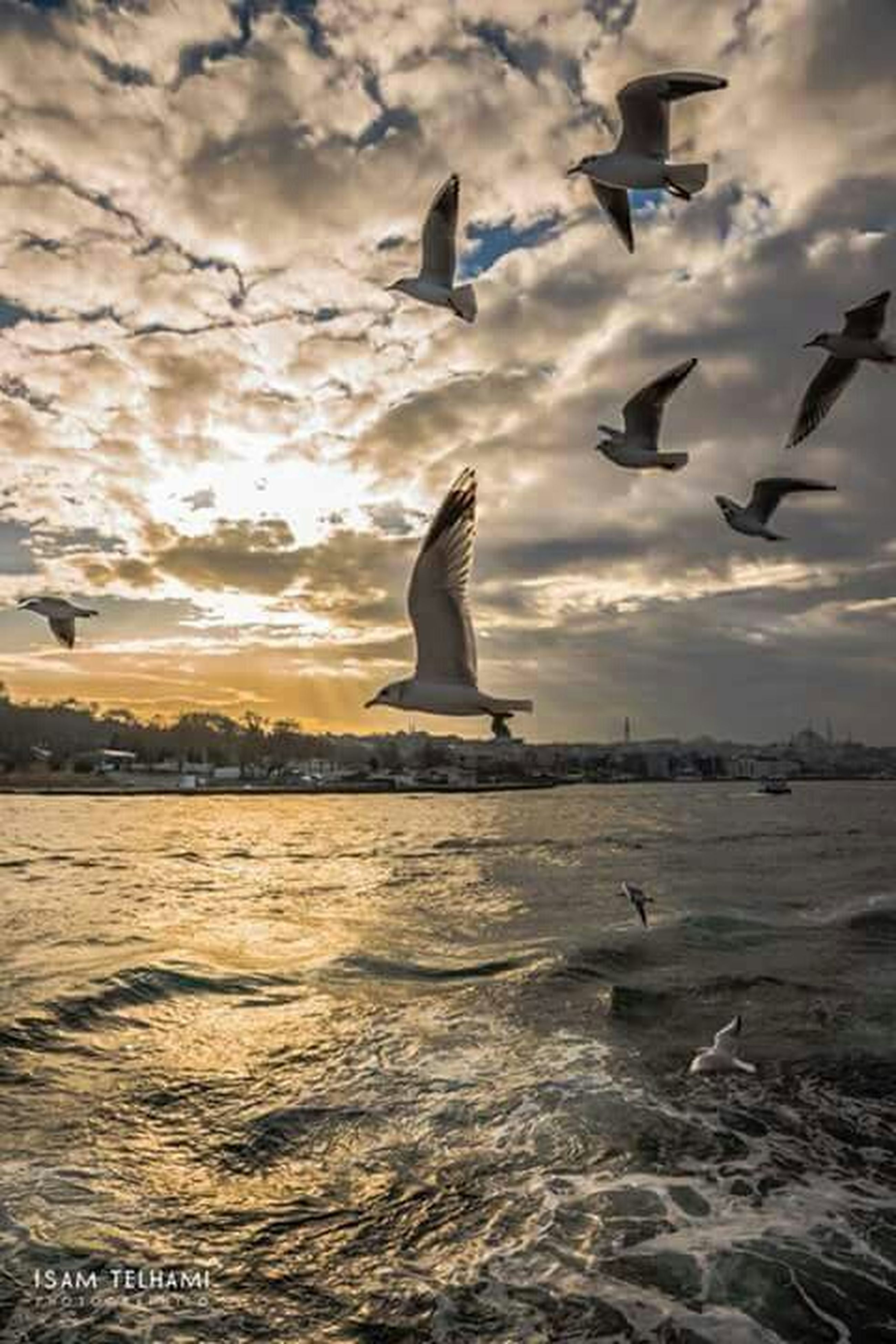 bird, flying, animals in the wild, animal themes, water, seagull, wildlife, sky, sea, spread wings, cloud - sky, nature, mid-air, silhouette, cloud, beauty in nature, sunset, cloudy, scenics