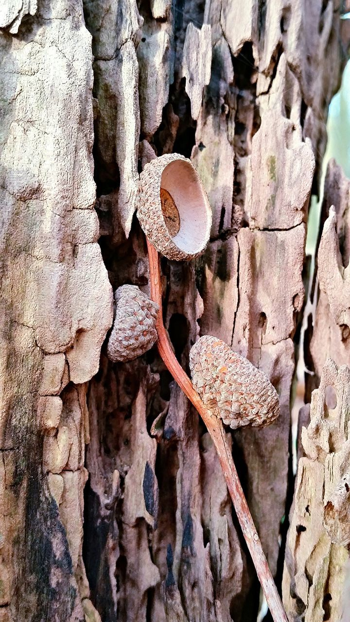 Close-Up Of Dry Twig On Tree Trunk