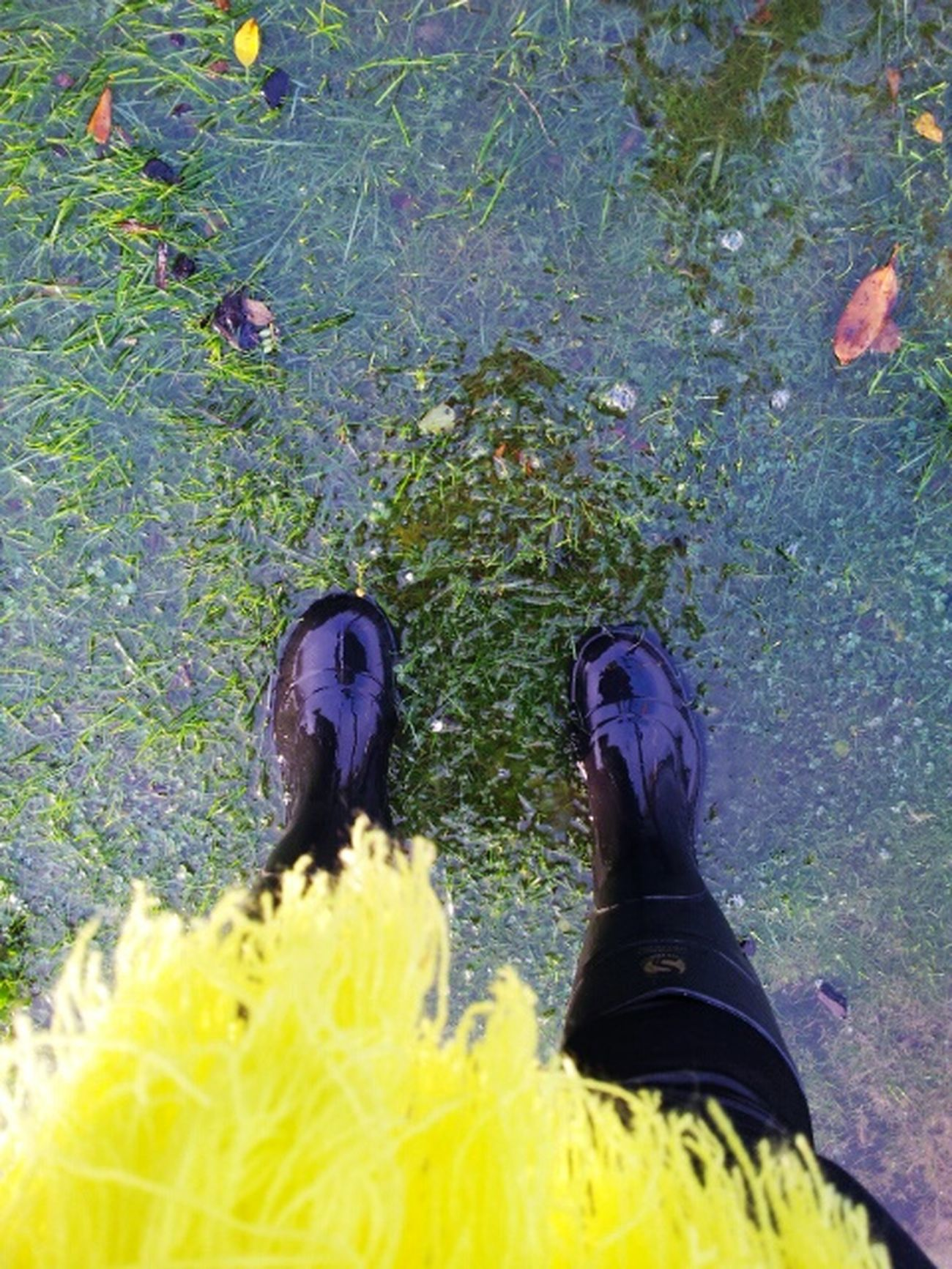 Gumboots Kinda Day Chilly Yellow Scarf  Raining Day Dunedin New Zealand