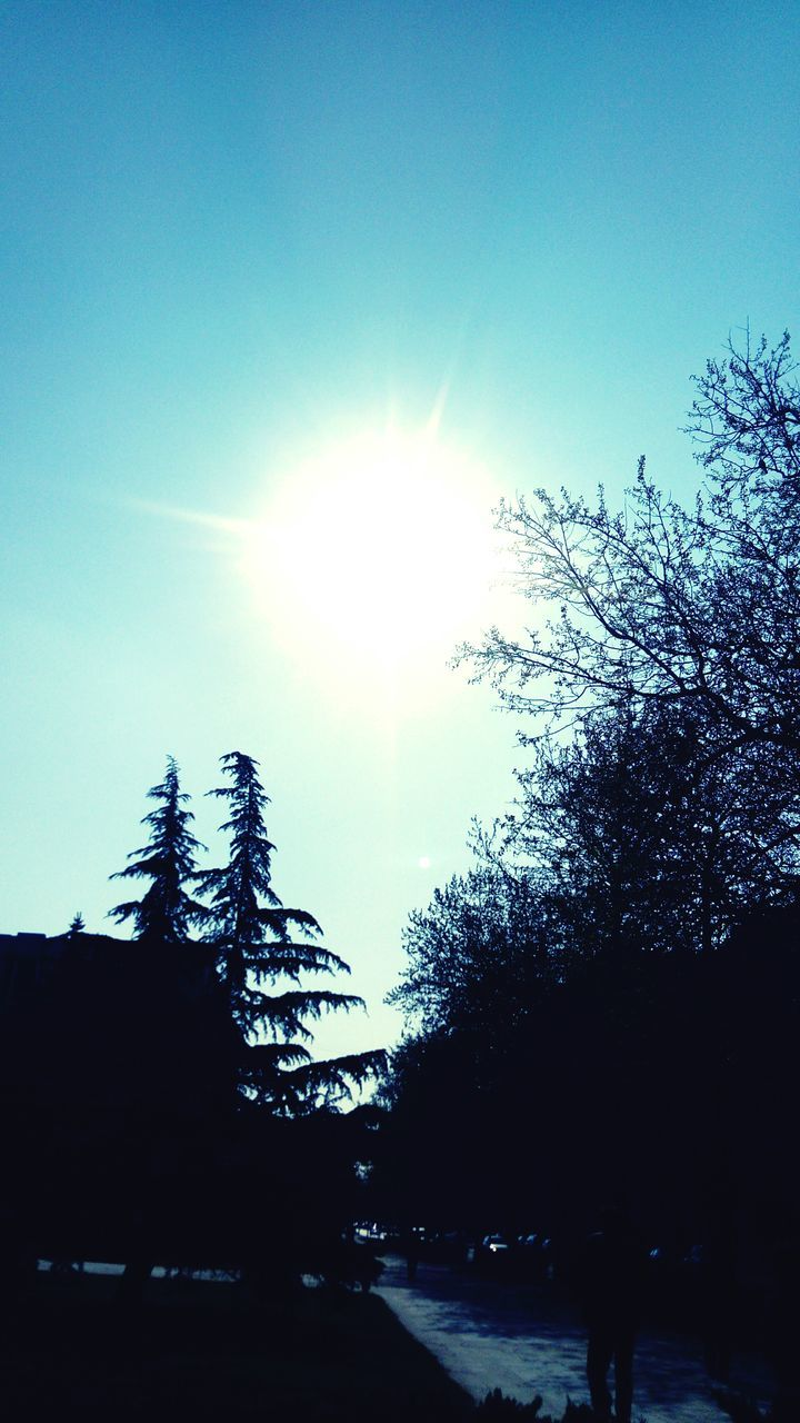tree, sun, silhouette, sunbeam, nature, sunlight, beauty in nature, tranquility, scenics, growth, sky, no people, blue, landscape, clear sky, outdoors, snow, day