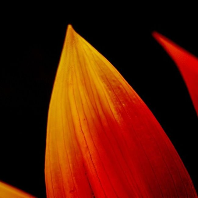 Fabmacro Ig_closeups Hdm_flowers Rsa_macro_ Pf_arts Ig_4every1_orange Acciio Insta1view Halforpartial_nio Macro_secrets Nature_uc Instag_colorsplash