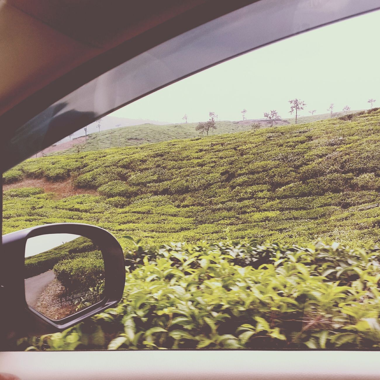 Munnar Kerala_tourism Kerala India Teaestate GodsOwnCountry Nature Photography Natureporn PhonePhotography Roadtrip Oneplusone Phonography  Secondeyeemphoto Epicness Tranquility