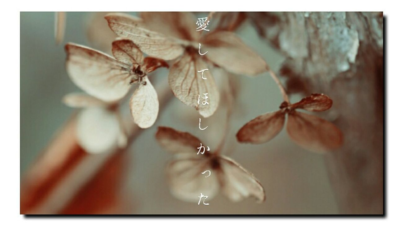 素枯れ紫陽花 EyeEm Nature Lover Flowerporn Nature