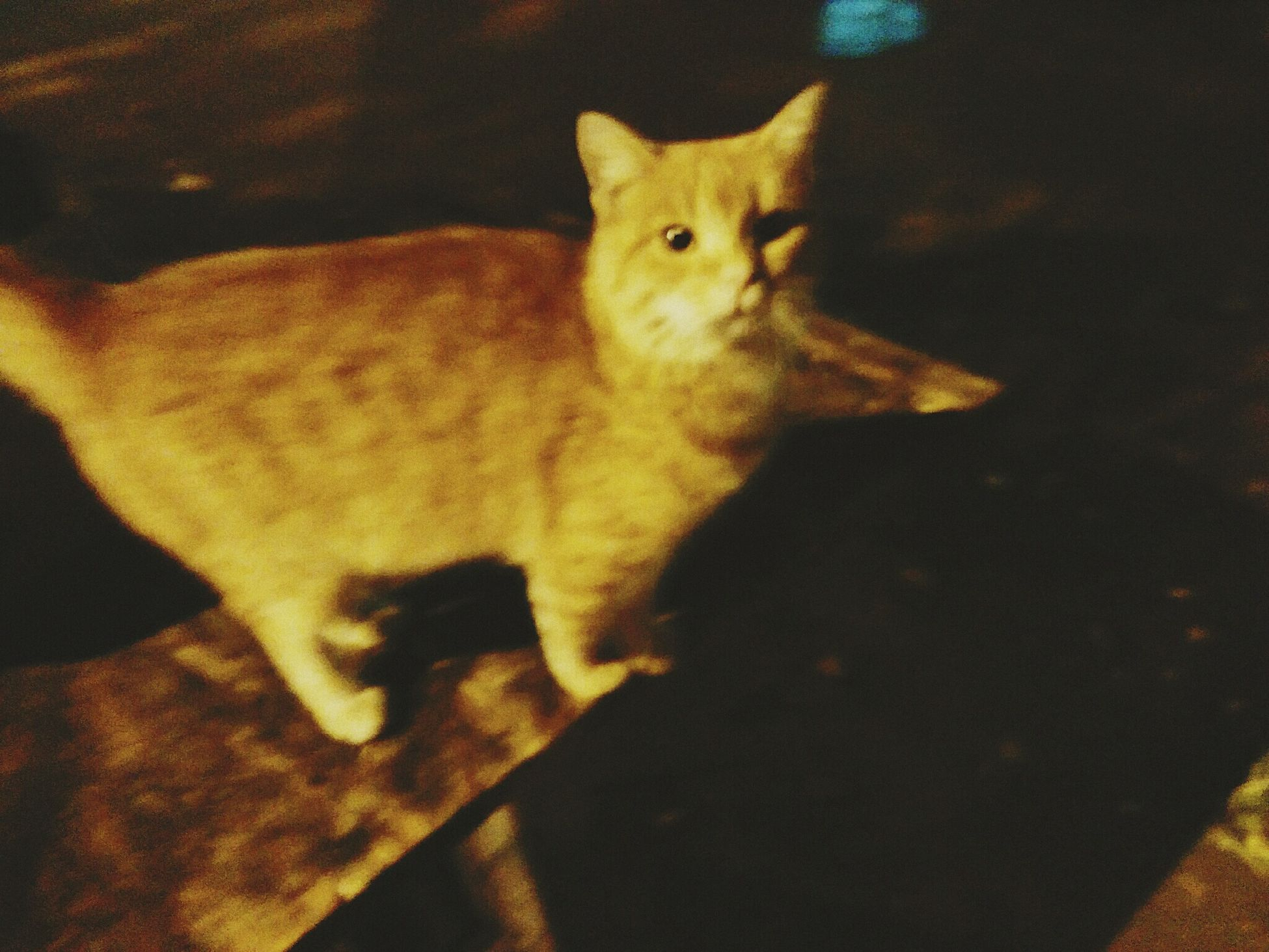 Cat...sweet cat. Homeless Odessa Cat Homeless Sad Red_cat Ukraine One Animal No People Night Don't_buy_take_from_shelter