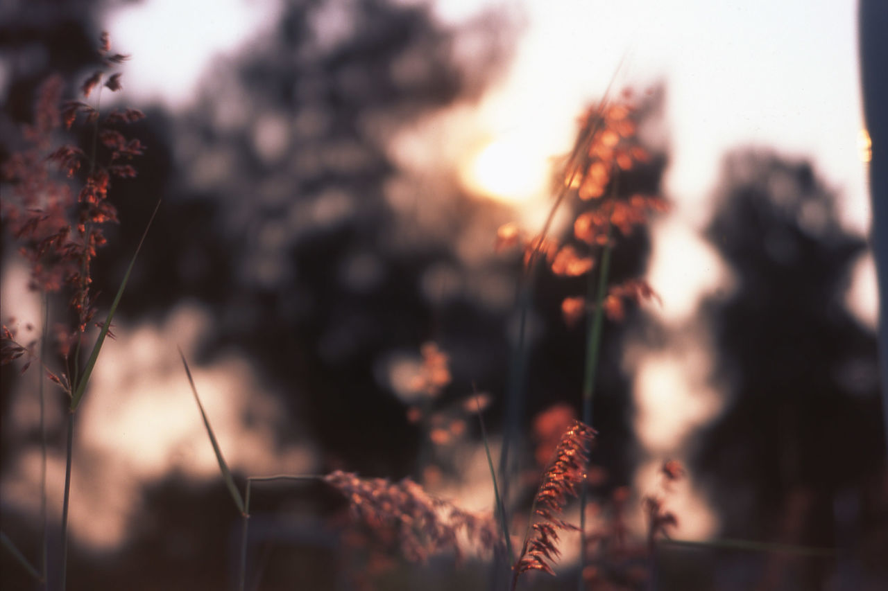 Autumn Beautiful Beautiful Nature Beauty In Nature Blur Bokeh Close-up Enjoying Life Eye4photography  EyeEm Best Shots EyeEm Nature Lover Focus Fujifilm Klasse S Light And Shadow Nature Nature Plant RVP RVP50 Shadow Sun The Great Outdoors - 2016 EyeEm Awards Sunset Velvia