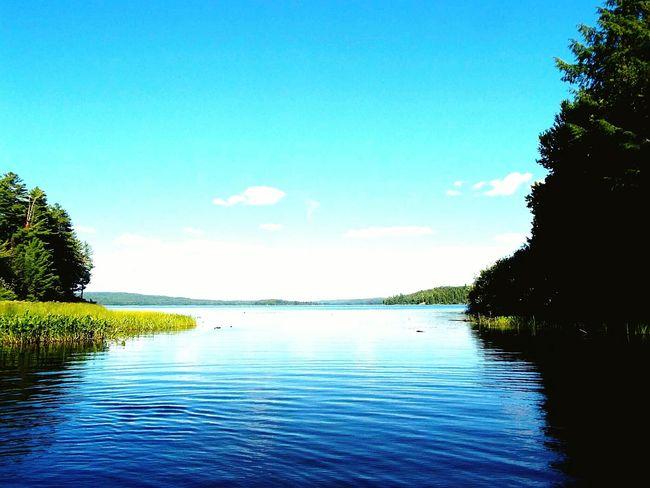 Algonquinprovincialpark Algonquin Park Lake Green Nature Water